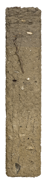Soil conditions.